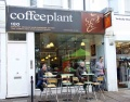 Tea & Coffee Plant Portobello Road
