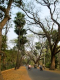 View in Santiniketan